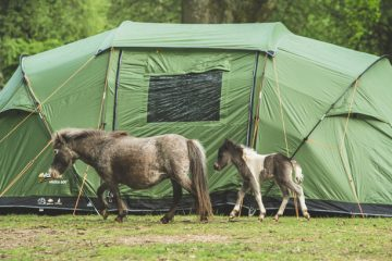 Nature and camping at its very best – Hollands Wood campsite in the New Forest